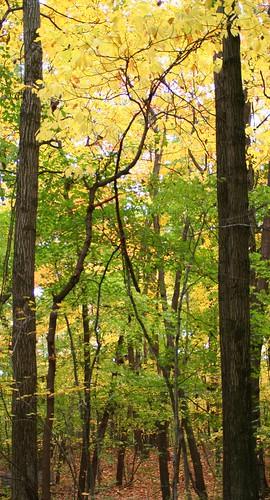 park autumn ohio tree fall nature water leaves leaf northwest toledo wildwood tamron metropark aprevit