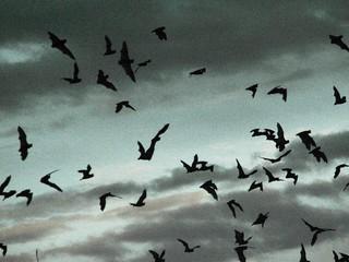 Carlsbad Bats