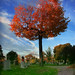 Cemetery Tree by Jonathan!