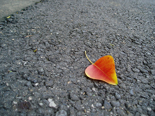 Color of fall - あきのいろ - 無料写真検索fotoq