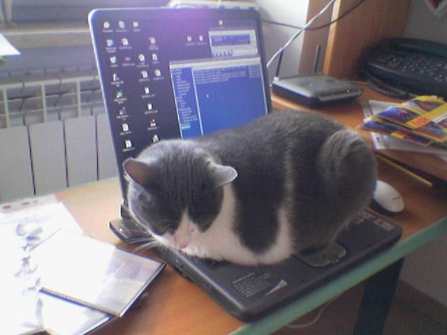 Warmware ha ricominciato a fare freddo la mia gatta for Fare la mia planimetria