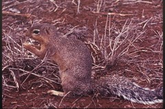 beaver(0.0), animal(1.0), squirrel(1.0), rodent(1.0), fauna(1.0), wildlife(1.0),
