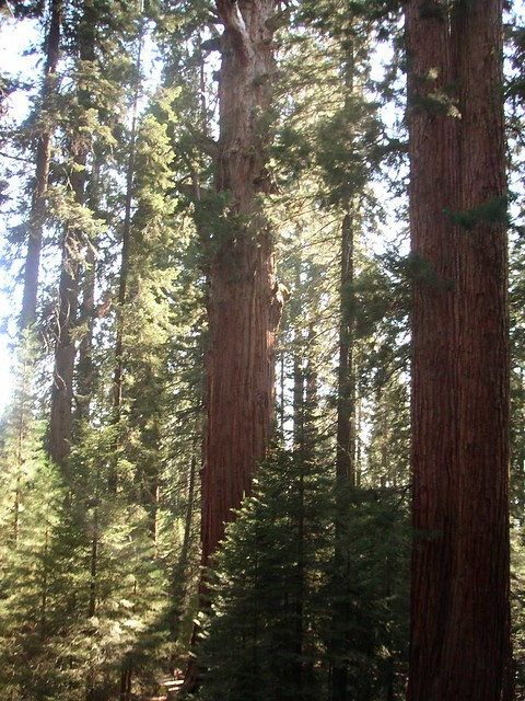 Sequoia National Forest California 6 Flickr