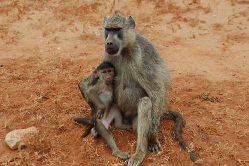Monkey baby and mother