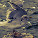 seagull in blue light