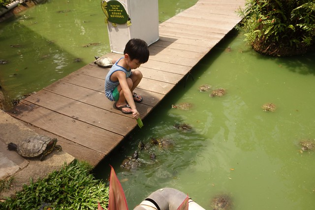 Jerry feeding the terrapins in the pond.
