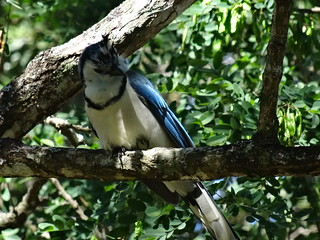 Image of Rincon de la Vieja National Park. naturaleza bird nature costarica ave puravida guanacaste calocittaformosa rincondelaviejanationalpark parquenacionalrincóndelavieja urracacopetona