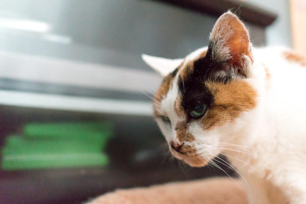 老猫マイ、21歳の誕生日を迎える