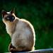 Gato by juanrfa