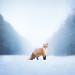 Freya The Fox by Alicja Zmysłowska