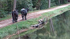 Mules Towing a Canal Boat