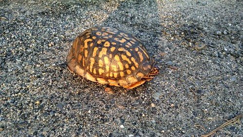 Bix Turtle