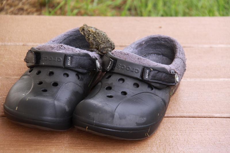 frog in crocs (1)