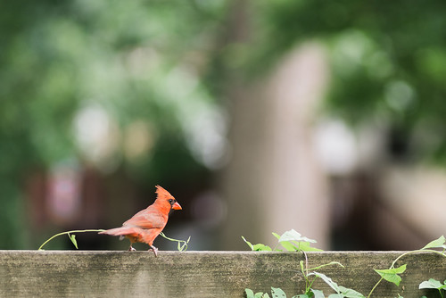 Hello, Mr. Cardinal.