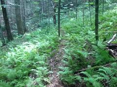 Pig Trail
