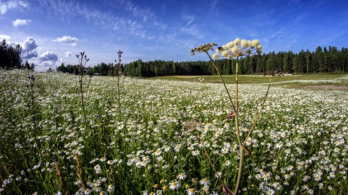 plant flower field meadow fisheye flowerbed 8mm samyang