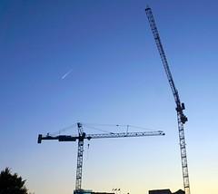 DC Dance of the Cranes 59084