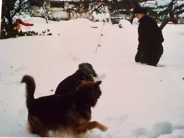 Frolicking in the snow, Maddie, Rufus and Ryan. Photo Rhonda Cliff