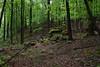 Rocks in the Forest by randothepirateking