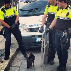 Police guard a stray kitty from running onto traffic while waiting for an animal cotrol service #cats ##kitties #nicecops #actsofkindness #barcelona