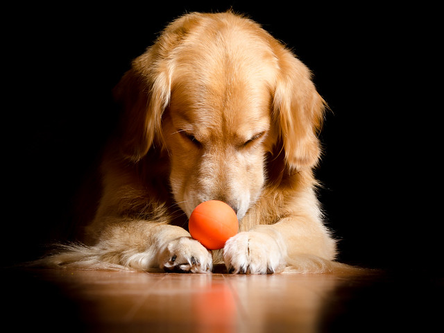 Dog and Ball