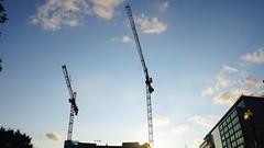 DC Dance of the Cranes 59049