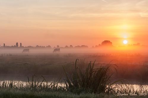 sky mist water netherlands fog sunrise cow nevel ditch cattle outdoor stock meadow clear grassland weiland koe sloot krimpenerwaard schoonhoven zonsopkomst