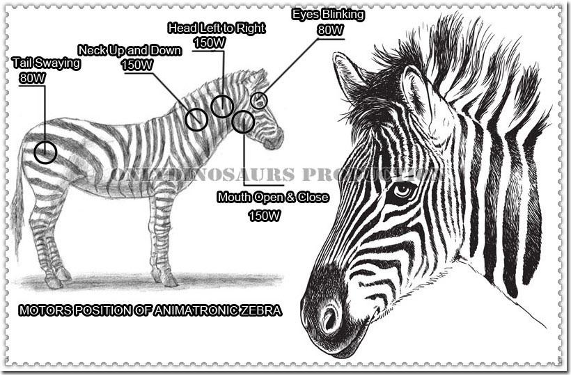 Motors Position of Animatronic Zebra