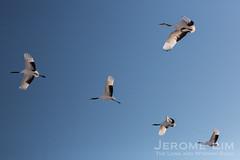 JeromeLim-0916