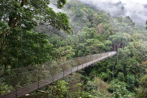 瓦拉米步道-黃麻一號吊橋