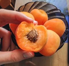 Season of apricots #apricot #season #food
