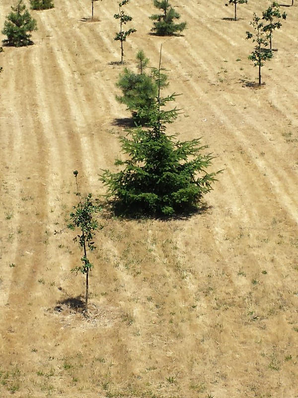 Dry Oregon