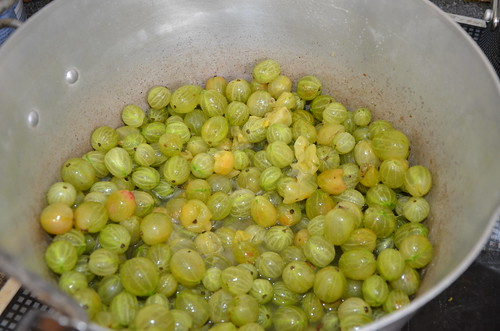 gooseberry jam July 15 1