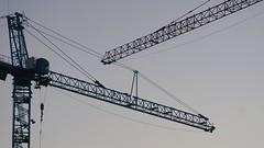 DC Dance of the Cranes 59102