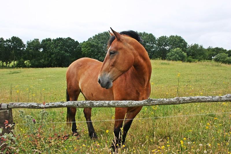 Pferd auf Wiese Rügen Granitz
