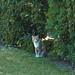 Cats of the Hood, 2 by Finn Frode (DK)