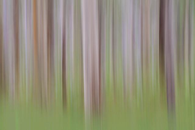 Boranup Blur, Karri Forest, Western Australia