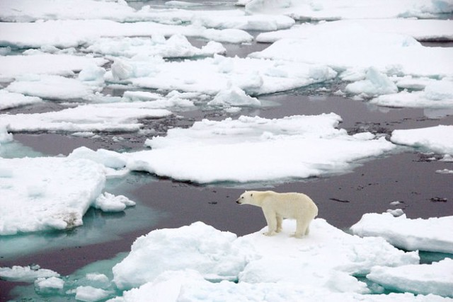 polarosos