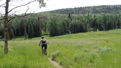 colorado meadow hike biker wildflowers mountainbiking mesacounty uncompahgreplateau