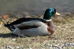 2-10-05 Ducks