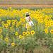 Sunflower Girl by Yuga Kurita