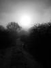 Foggy January Walk by FerrousOxide