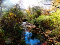 Wantagh - Twin Lakes Preserve - Autumn (72)