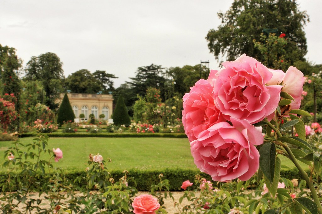 Rose Garden of Parc de Bagatelle, Bois de Boulogne, Paris