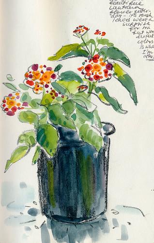 Sketchbook #90: New Flower