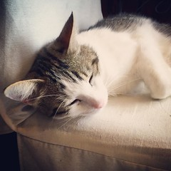 Hotel pet at Hotel De L'Europe #kitty 法國喵咪 - Photo of Leigné-les-Bois