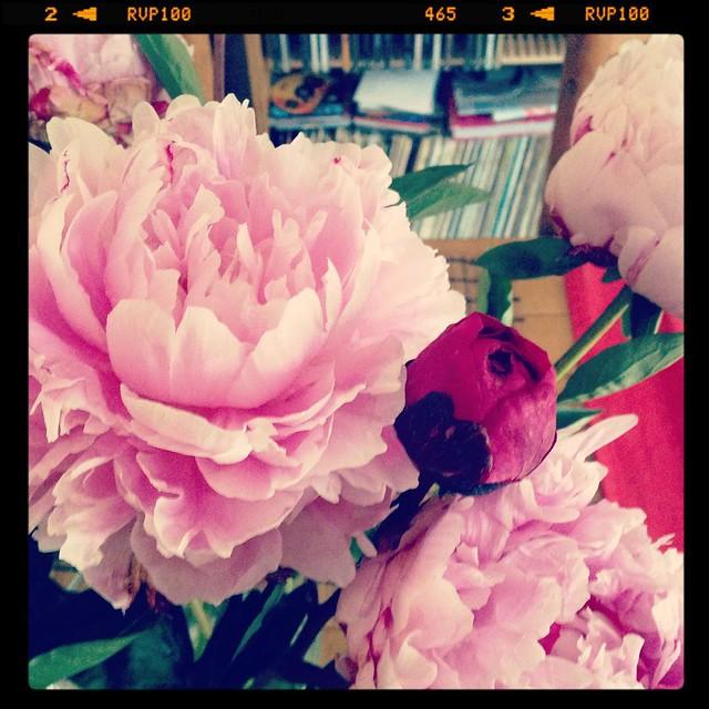 Happy Friday #peonies #blooms #flowersinstagram