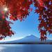 Mt Fuji Fall 7584