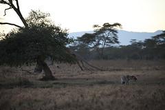 Kenya  - Lake Nakuru