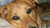 Puppy Eyes 2